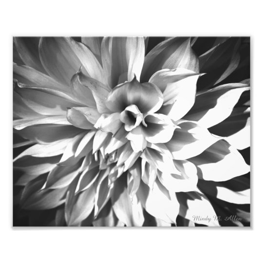 Black white chrysanthemum print 8 x 10