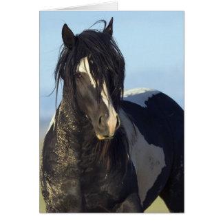 Black & White Comes Close Wild Horse Greeting Card