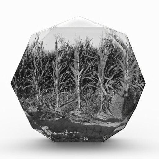 Black & White Corn Field Award