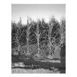 Black & White Corn Field Letterhead Design