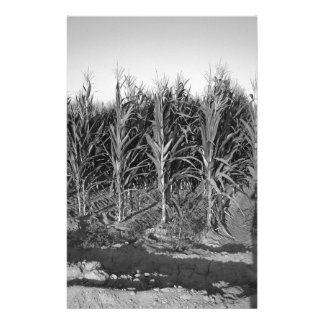 Black White Corn Field Custom Stationery
