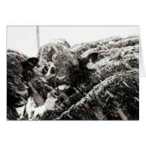 Black & White Cow Catching Snowflakes Greeting Card