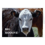 Black & White Cow - Western Change of Address Cards