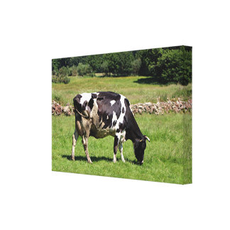 Black & white dairy cow , El Camino, Spain Canvas Print