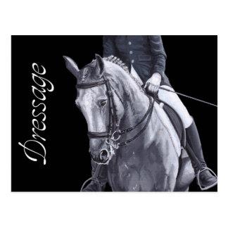Black White Duo Dressage Horse postcard