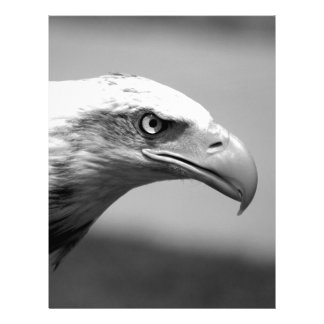 Black & White Eagle Eye Letterhead