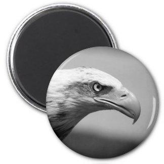 Black & White Eagle Eye Magnet
