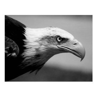 Black & White Eagle Eye Postcard