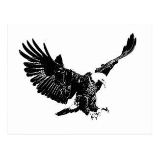 Black & White Eagle Postcard