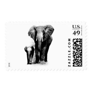 Black & White Elephant Family Postage Stamps