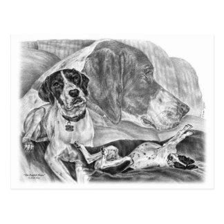 Black & White English Pointer Dogs Postcard