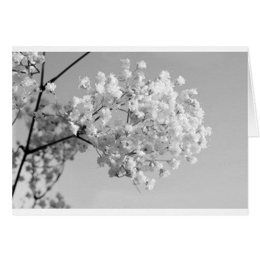 Black & White Floral Card
