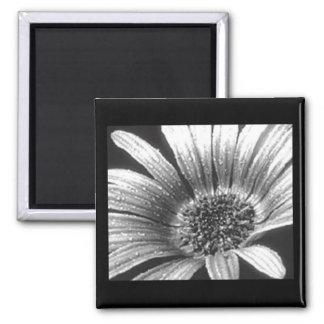 Black & White Flower Close Up Fridge Magnet