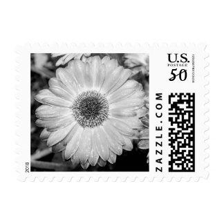 Black & White Gerbera Daisy Postage