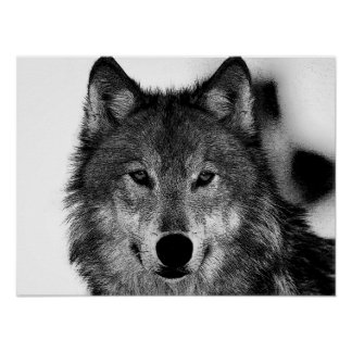 Black & White Grey Wolf Artwork Poster