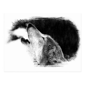 Black & White Grey Wolf Sketch Artwork Postcard