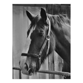 Black White Horse - Animal Photography Art Letterhead