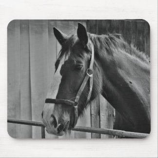 Black White Horse - Animal Photography Art Mouse Pad