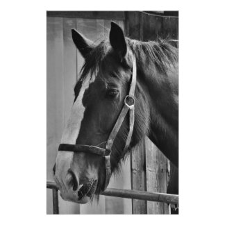 Black White Horse - Animal Photography Art Stationery