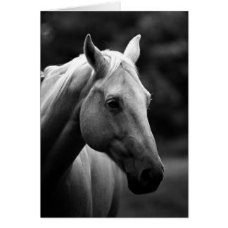 Black & White Horse Card