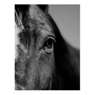Black White Horse Eye Artwork Postcard