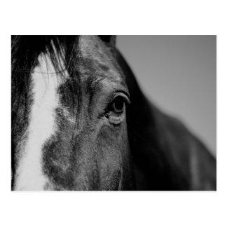 Black White Horse Eye Artwork Postcard