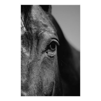 Black White Horse Eye Artwork Stationery
