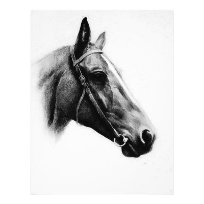 BW Horse Head / Face Drawing - Black & White Horse Face - Black & White Farm