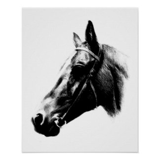 Black White Horse Pencil Digital Artwork Poster