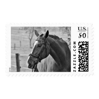 Black & White Horse Photo Postage