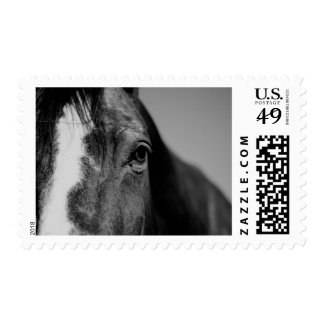 Black & White Horse Postage Stamps