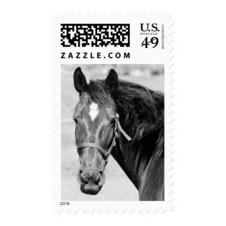 Black White Horse Postage Stamps