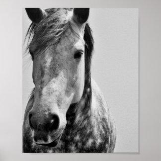 Black & White Horse Poster