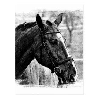 Black White Horse Sketch Postcard