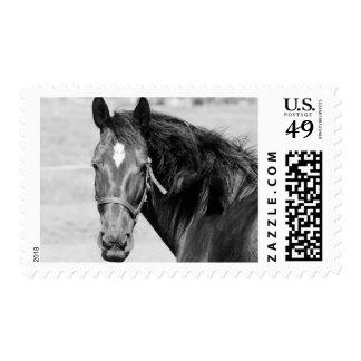 Black White Horse Stamp