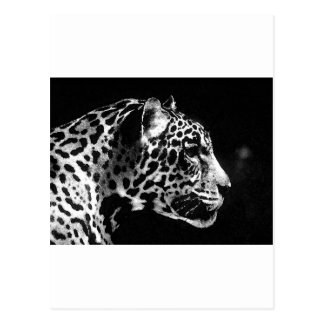 Black & White Jaguar Pop Art Postcard
