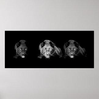 Black & White Jaguar Poster