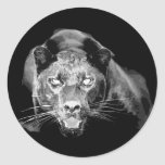 Black & White Jaguar -Wild Cats Round Sticker