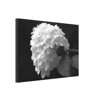 Black White Lime Hydrangea Flower Canvas