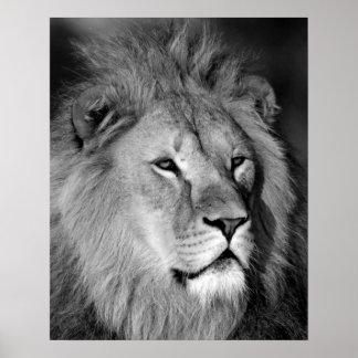Black White Lion - Animal Photography Art Poster