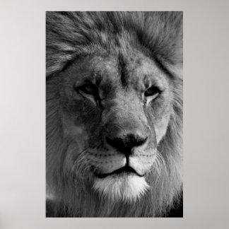 Black & White Lion Photography Artwork Poster
