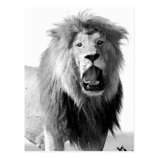 Black & White Lion Postcard