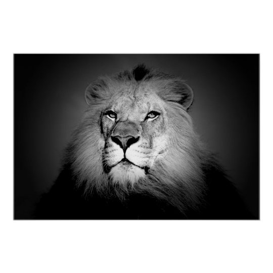 Black white lion poster print