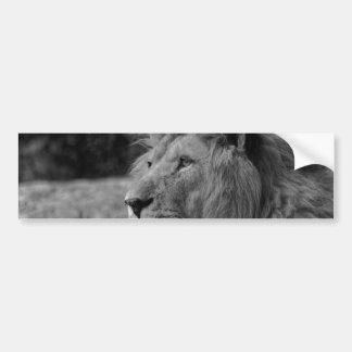 Black & White Lion - Wild Animal Bumper Sticker