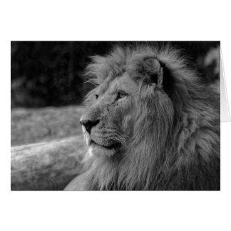 Black & White Lion - Wild Animal Card