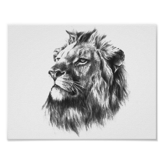 Black white lions head poster