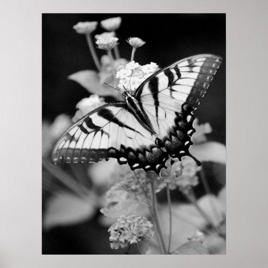 Black & White Monarch Butterfly Print