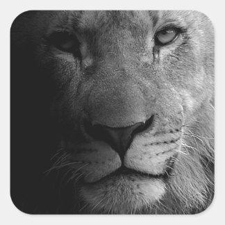 Black White Motivational Leadership Lion Portrait Square Sticker