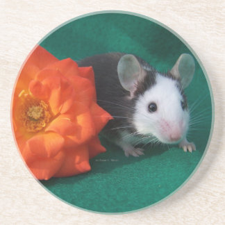 Black White Mouse and Orange tea rose Beverage Coaster