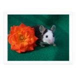 Black White Mouse and Orange tea rose Post Card